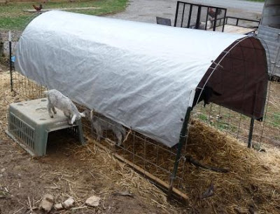 goat shelter | mountain hollow farm