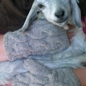 Goat Whisperer's Fingerless Gloves