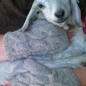 Goat Whisperer's Fingerless Gloves